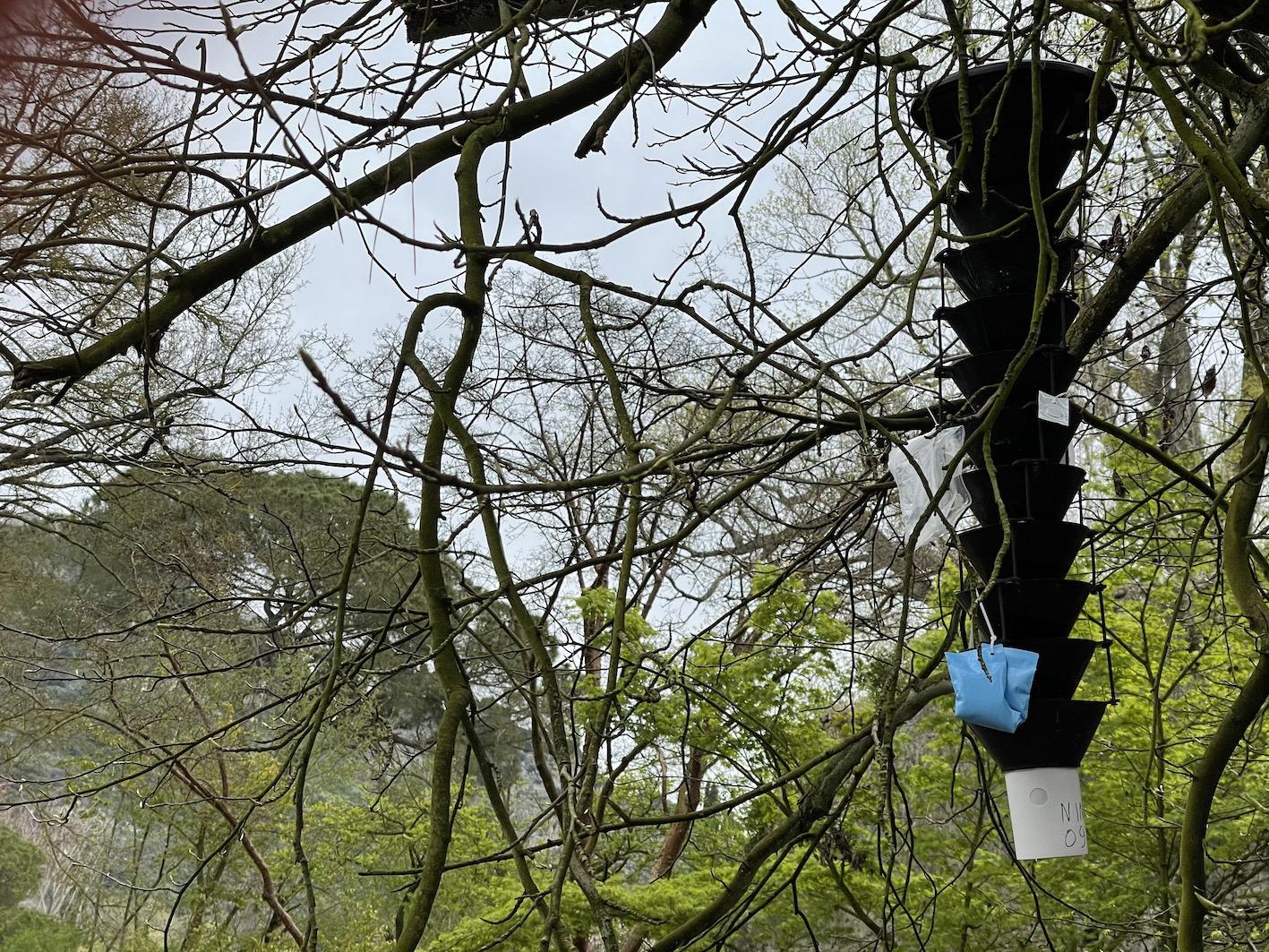 Monumento naturale, via al censimento degli insetti